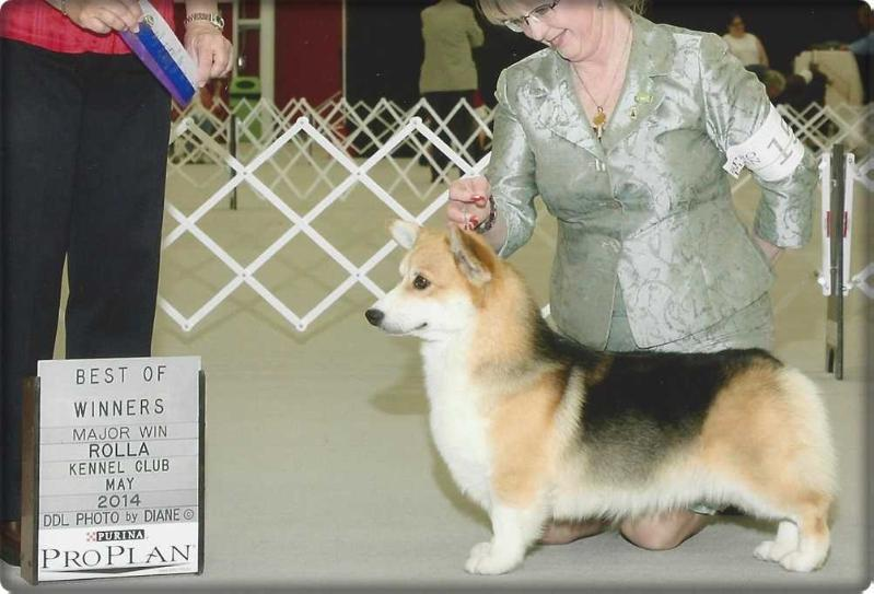 AKC Ch. Excalibur's King Arthur of Wind Dial