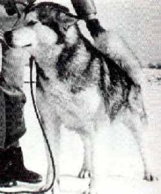 CH Dorry's Sitka Of North Wind